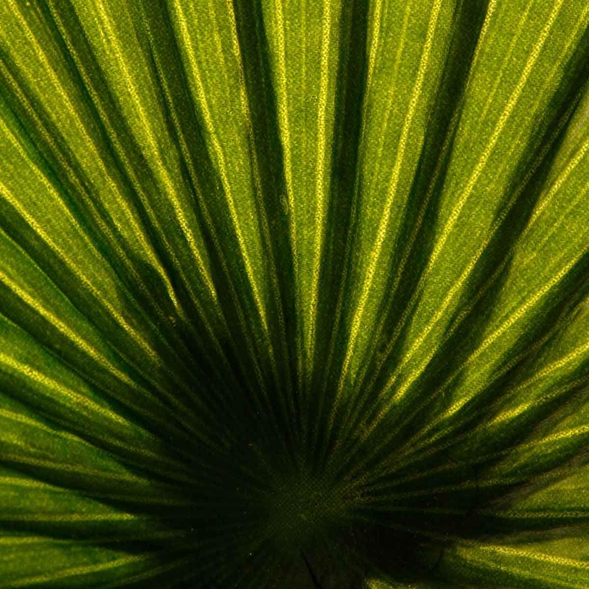 Palmier artificiel 3 troncs H. 180 cm