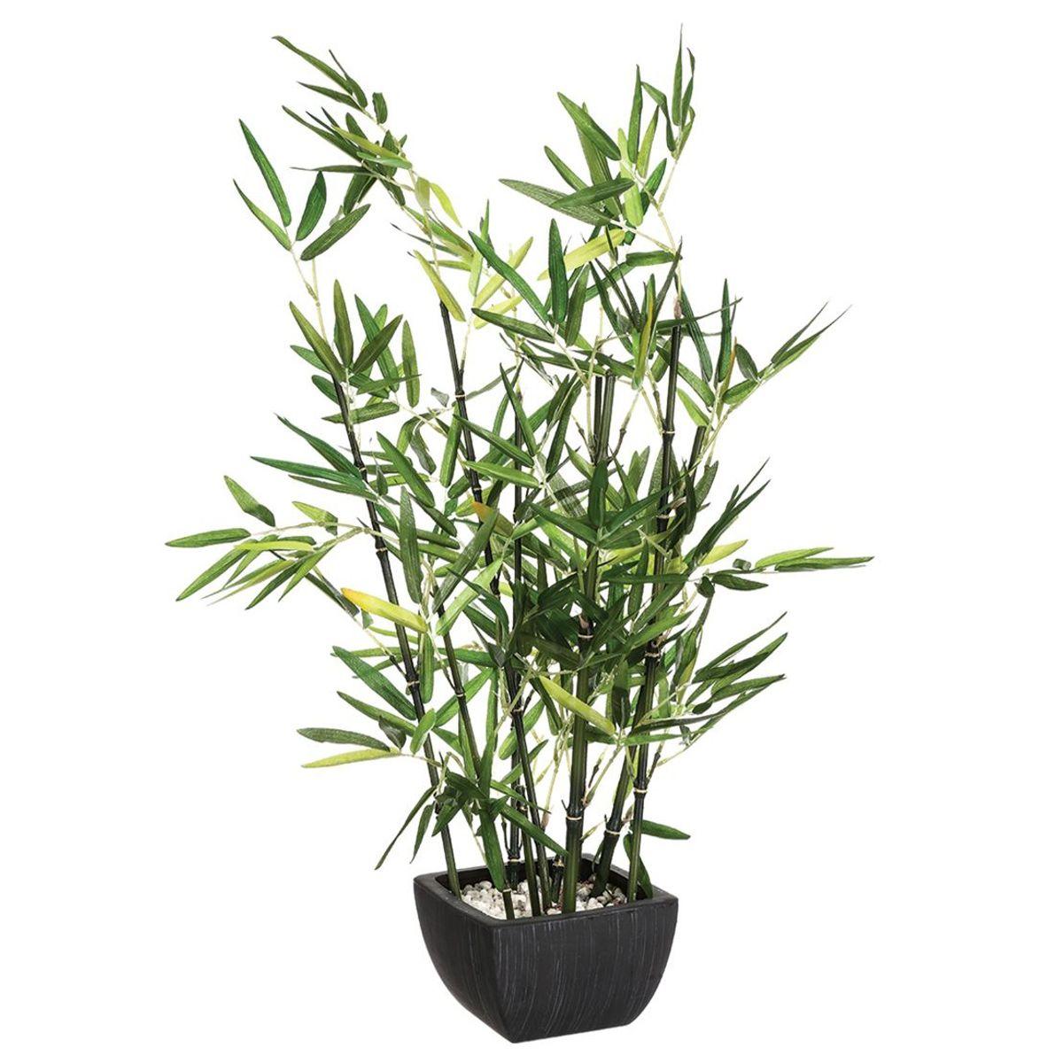 Arbuste en pots bamboo